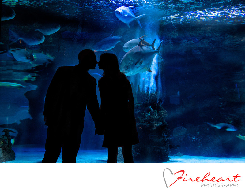 The Aquarium Downtown Houston engagement