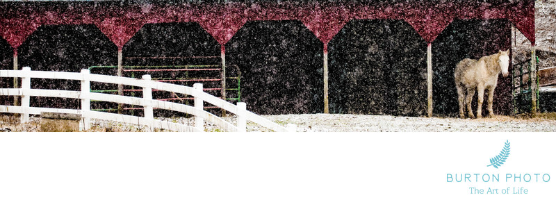 Boone Scenic Photographer Horse and Barn in Snow