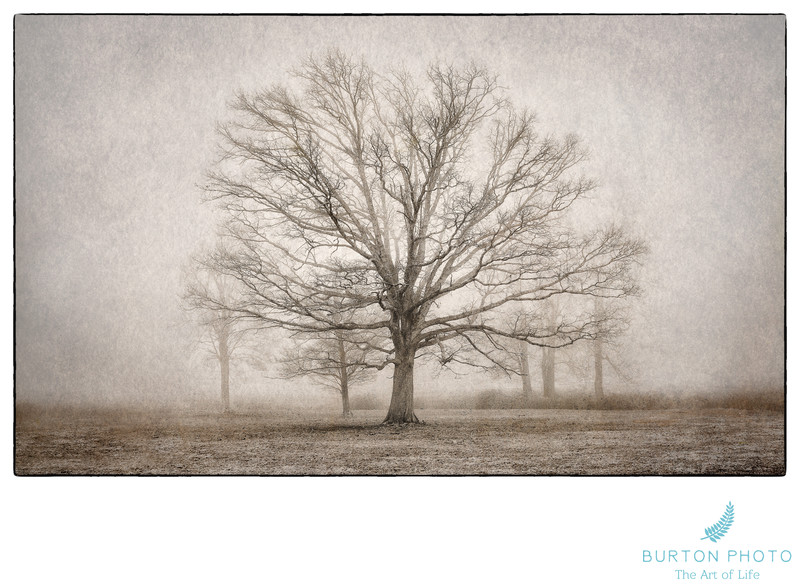 Boone Scenic Photographer Trees in Field