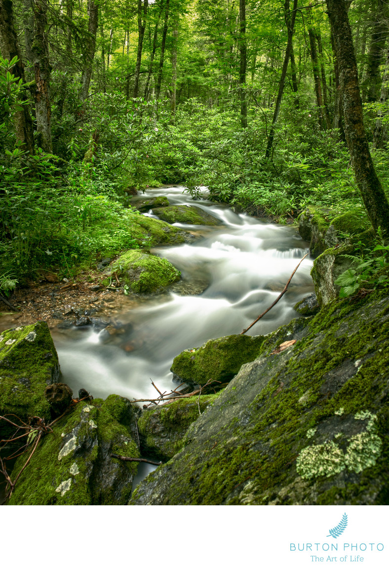 Blue Ridge Mountain Scenic Photographer Mountain Stream