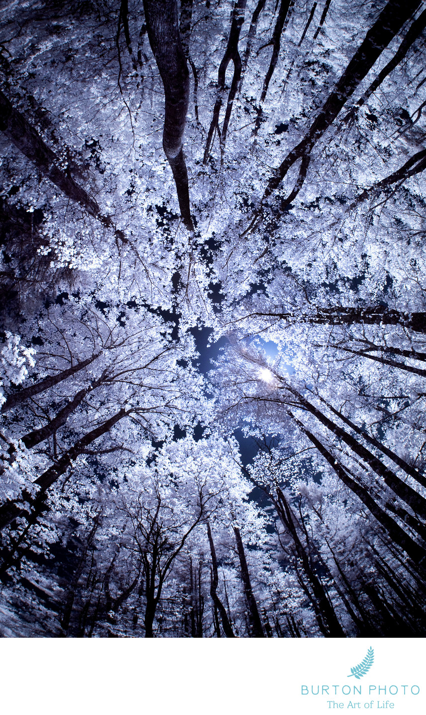 Blue Ridge Parkway Scenic Photographer Infrared Trees