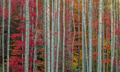 Boone Fine Art Photographer Fall Trees