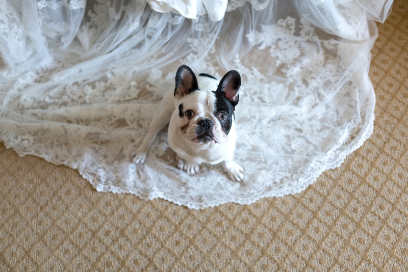 French Bulldog and Wedding Gown Decor and Details