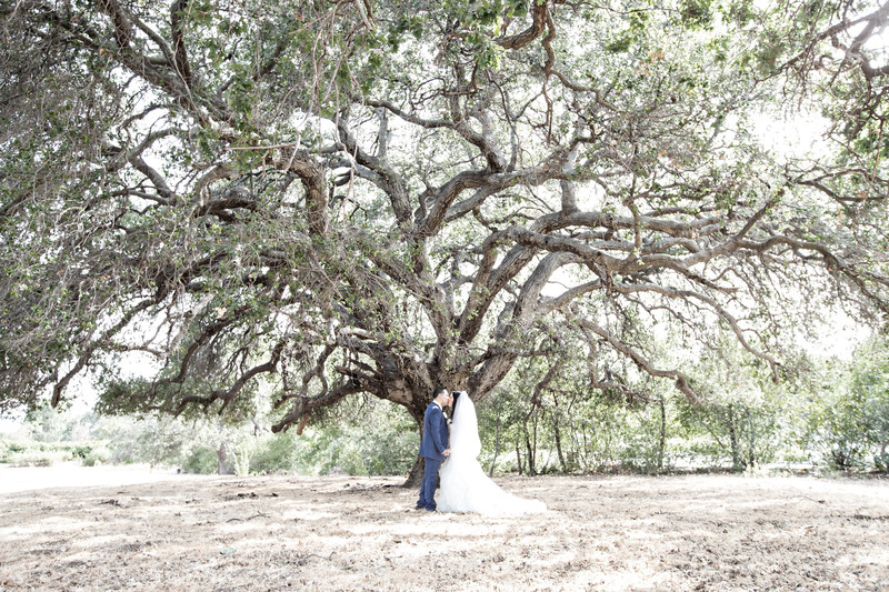 Wedding Kiss Under an Oak Tree