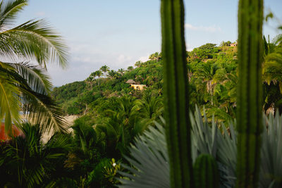 View of Teitiare Estates Sayulita Mexico Wedding