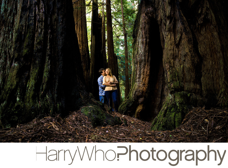 Butano State Park Engagement Session Photo