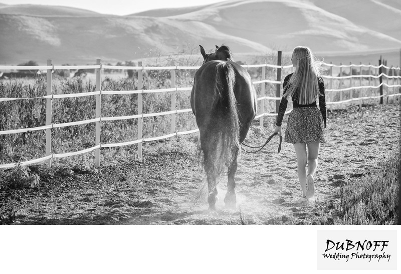 Black and White Equine Photography Image - San Francisco Bay Area