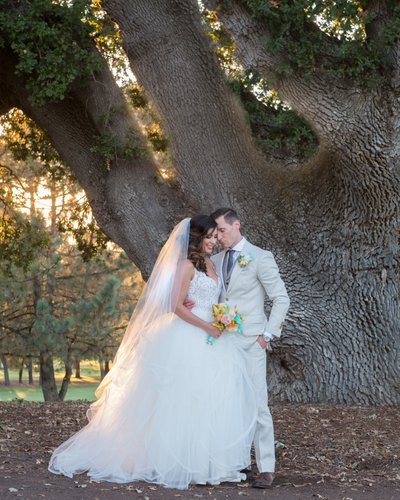 Bride and Groom in the San Francisco Bay Area with Oak Tree