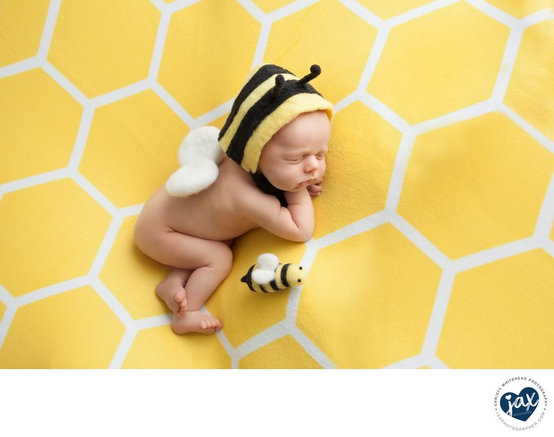 Little Baby Bee JAX Florida Photography