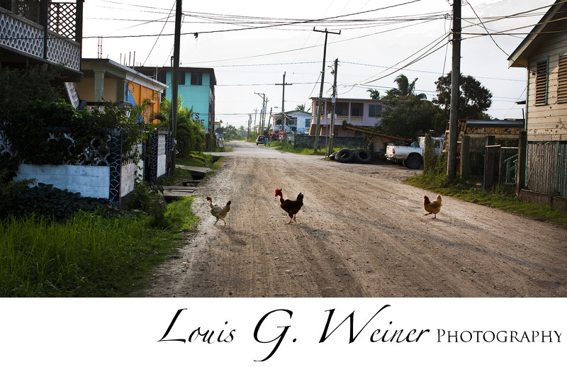 Chickens crossing the road, Belize Travel Photography