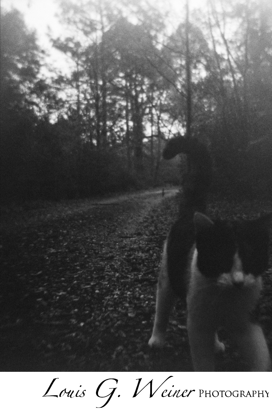 Cat on a rural road, black and white file,