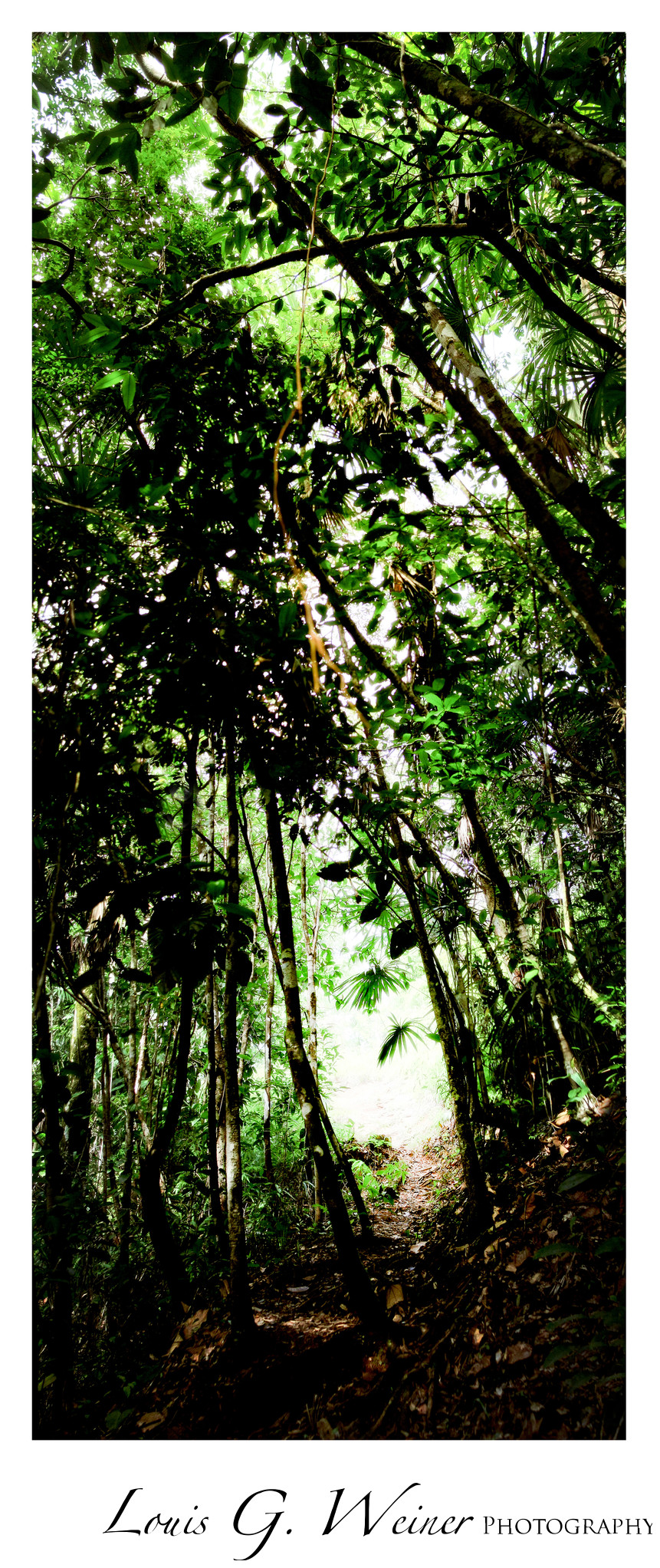 Tropical Forest inBelize. Travel Photography