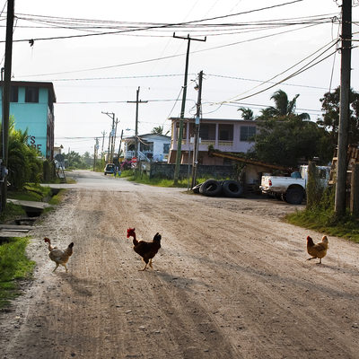 Why did the chickens cross the road, Dangriga Belize