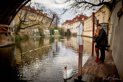 as the swan glides by Prague marriage proposal