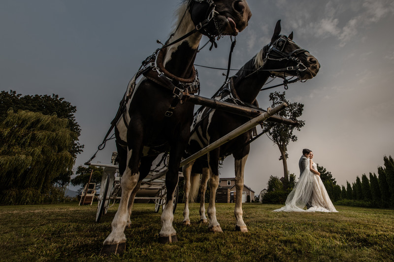 Horse Carriage Wedding Photo