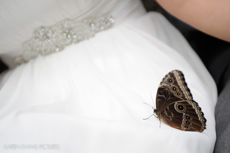 Wedding Photography at the Detroit Zoo
