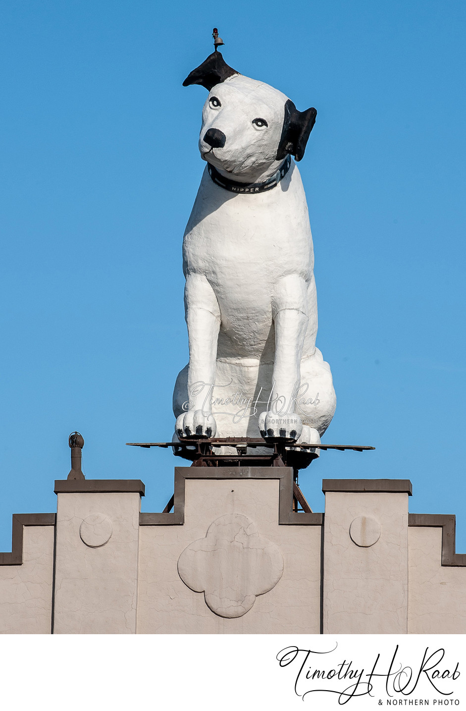 Albany's Nipper Dog Statue 1