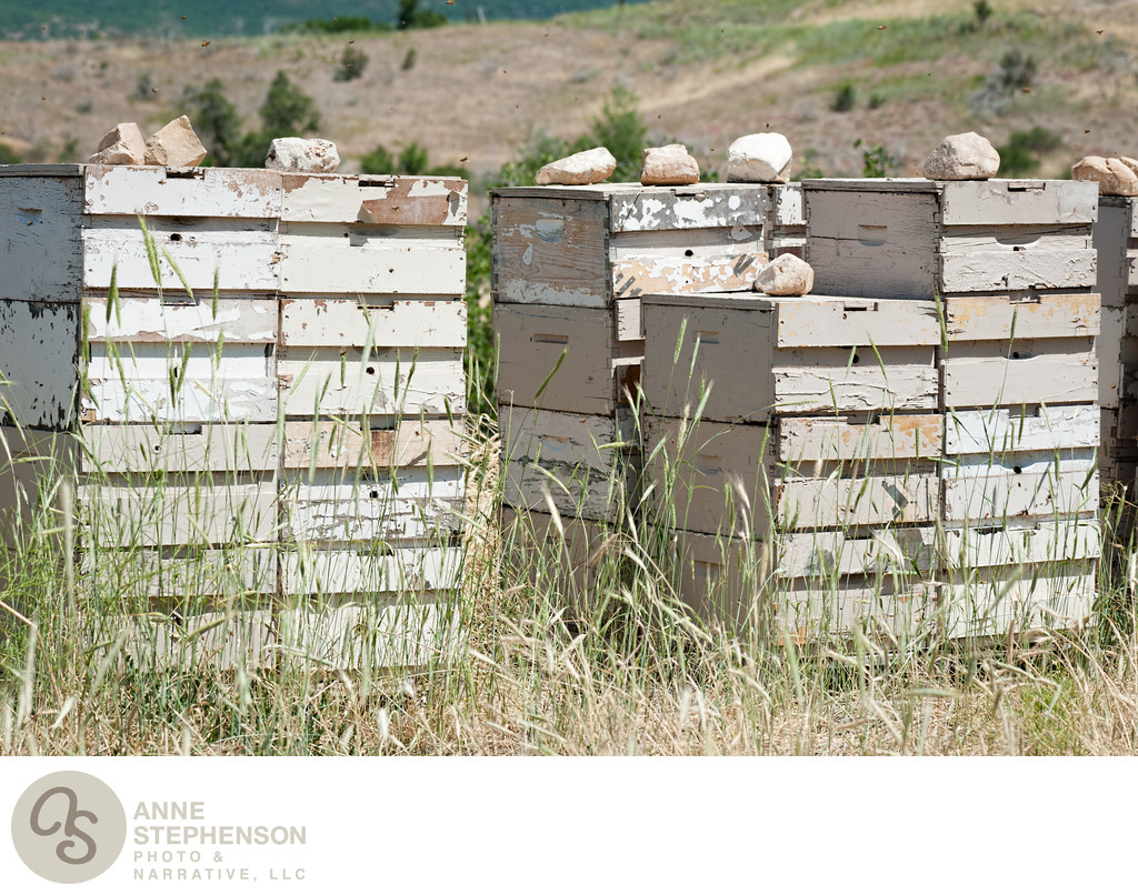 Bee Hives at the Farm for Pollination
