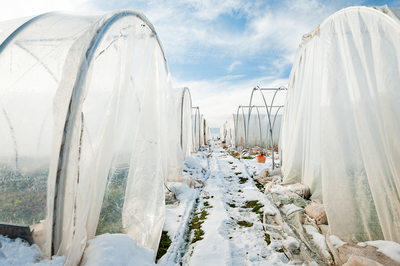 Winter Farm Scene with Plastic-Covered High Tunnels