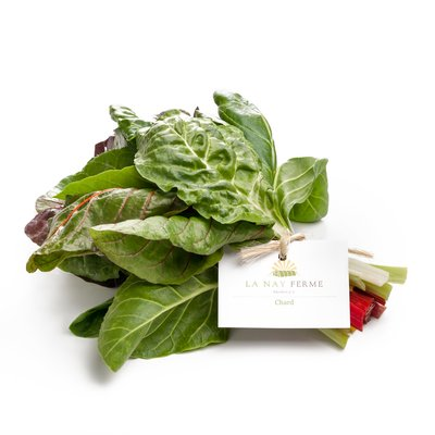 Rainbow chard bundle on white