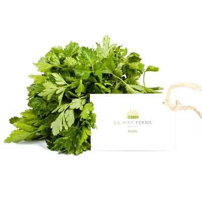 Fresh parsley bundle on white background