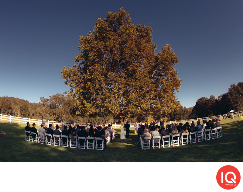 A wedding ceremony under the tree in Wine Country