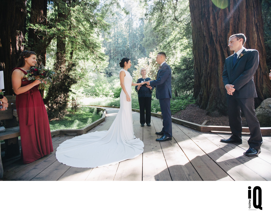 Getting Married at Muir Woods