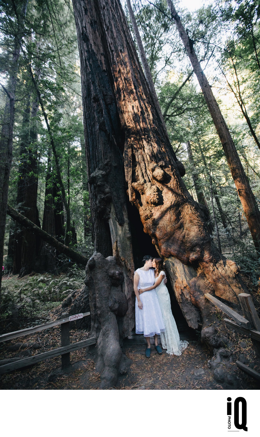 Two Brides at Muir Woods