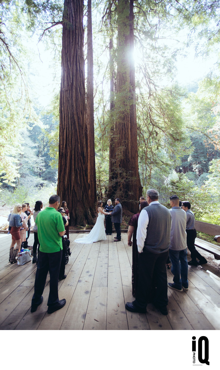 Under the Redwoods at Muir Woods
