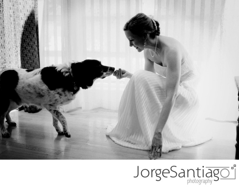 Bridal portrait with pet